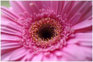think_pink_flowers_b