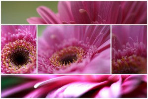 think_pink_flowers_c