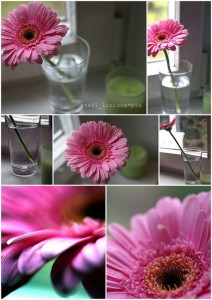 think_pink_flowers_a