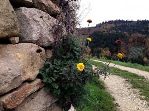 castellberg_5