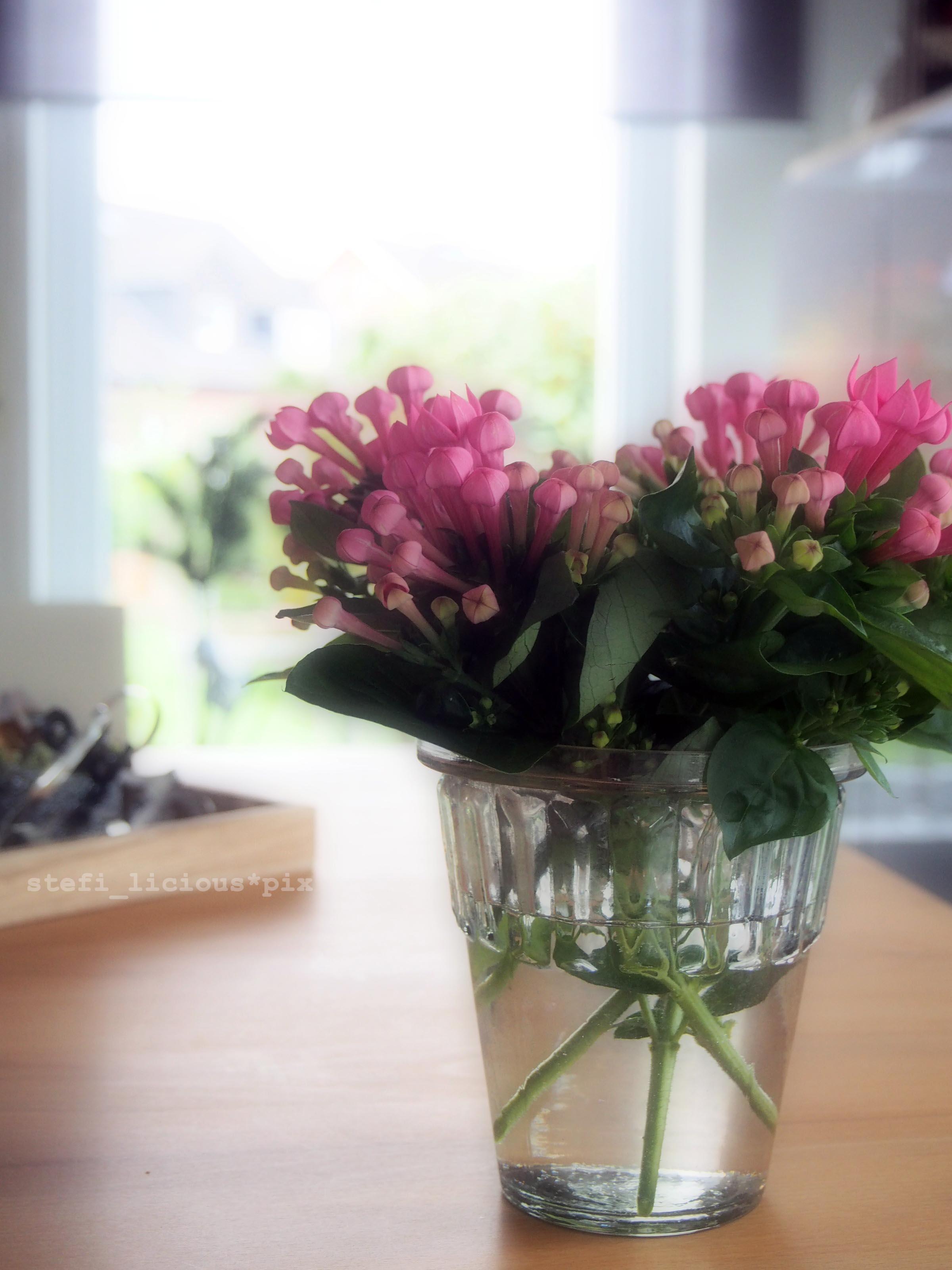 blumen am freitag in der vase